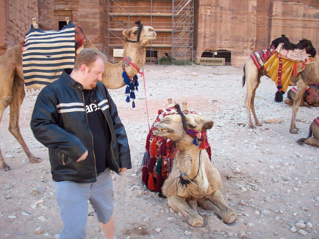Evil Camel in Petra Jordan