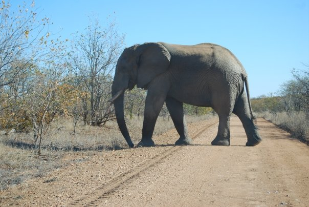 We%2520saw%2520a%2520few%2520of%2520these%2520Obstructions%2520in%2520the%2520road