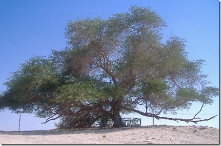 The Tree of Life Bahrain