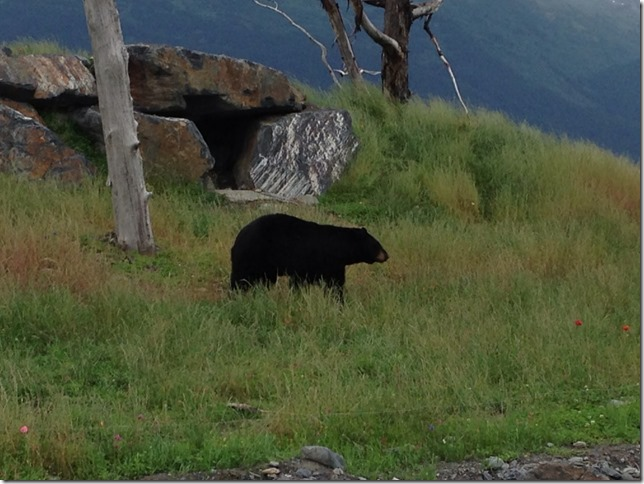big black bear in meadow