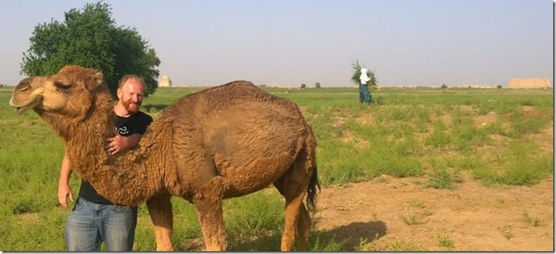 furry camel