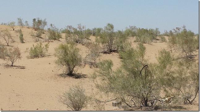 Turkmenistan Desert