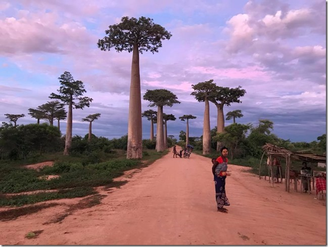 Sunrise at Avenue of the Baobabs