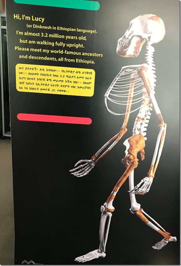 lucy bones