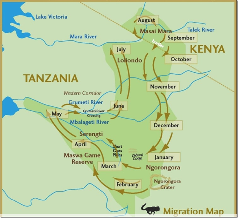 Wildebeest migration dates