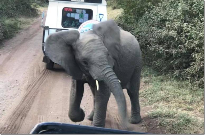 Mad baby elephant