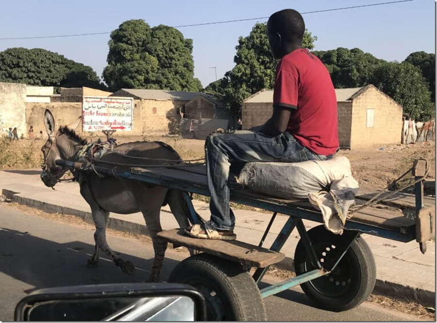 donkey cart senegal